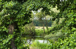 Foxton River. Wonderful looking through green trees, across a river, with some cattle on the other side Stock Photo