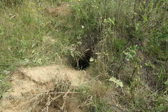 Foxy burrow Stock Images