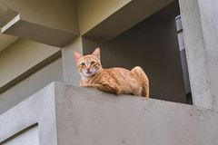 Foxy cat is sitting. On balcony Stock Images