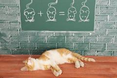 Foxy lazy Cat Stock Image
