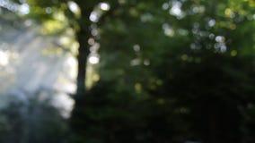Foyer de rayons légers d'arbre  banque de vidéos