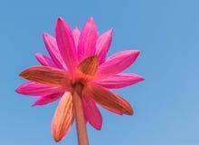 Foyer mou abstrait le beau lotus rouge avec le beau nuage de ciel bleu Photos stock