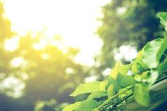 Foyer mou de feuille verte avec le plan rapproché dans la vue de nature sur le fond brouillé de verdure dans le jardin avec l'uti photos stock