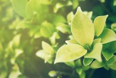 Foyer mou de feuille verte avec le plan rapproché dans la vue de nature sur le fond brouillé de verdure dans le jardin avec l'uti images stock