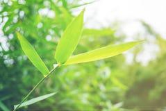Foyer mou de feuille verte avec le plan rapproché dans la vue de nature sur le fond brouillé de verdure dans le jardin avec l'uti photo libre de droits
