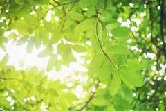 Foyer mou de feuille verte avec le plan rapproché dans la vue de nature sur le fond brouillé de verdure dans le jardin avec l'uti image libre de droits