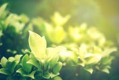 Foyer mou de feuille verte avec le plan rapproché dans la vue de nature sur le fond brouillé de verdure dans le jardin avec l'uti photo stock