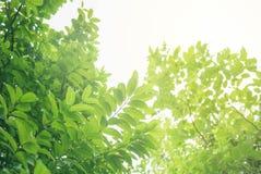 Foyer mou de feuille verte avec le plan rapproché dans la vue de nature sur le fond brouillé de verdure dans le jardin avec l'uti photographie stock libre de droits