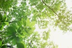 Foyer mou de feuille verte avec le plan rapproché dans la vue de nature sur le fond brouillé de verdure dans le jardin avec l'uti images libres de droits