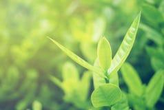 Foyer mou de feuille verte avec le plan rapproché dans la vue de nature sur le fond brouillé de verdure dans le jardin avec l'uti image stock
