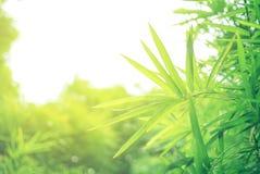 Foyer mou de feuille verte avec le plan rapproché dans la vue de nature sur le fond brouillé de verdure dans le jardin avec l'uti photos libres de droits