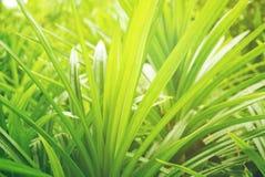 Foyer mou de feuille verte avec le plan rapproché dans la vue de nature sur le fond brouillé de verdure dans le jardin avec l'uti photographie stock
