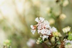Foyer mou et fleurs brouillées sur la couleur en pastel photo stock