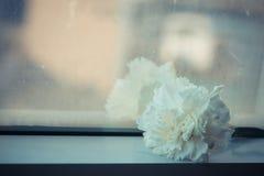 Foyer mou et rétro ton pour un oeillet de couleur blanche à l'arrière-plan de miroir Image libre de droits