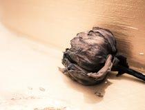 Foyer mou pour la vérité de la vie, de la foi et de désespéré, Lotus dans Buddh Image libre de droits