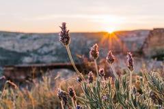 Foyer sélectif sur la fleur pourpre de lavande avec le pré de lever de soleil dedans photo libre de droits