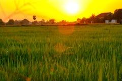 Foyer sélectif sur le champ vert avec l'éclairage doux de coucher du soleil photo stock