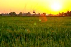 Foyer sélectif sur le champ vert avec l'éclairage doux de coucher du soleil image libre de droits