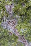 Foyer sur l'écorce d'arbre comme déclaration de l'amour Photographie stock libre de droits