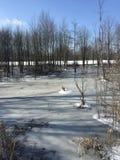 Fozen池塘 免版税库存图片