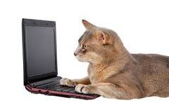 främre bärbar dator för katt Arkivbilder