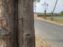 Främre bakgrund för skog för träbild- och suddighetsträd royaltyfri foto