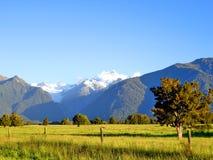 främre gräs- berg New Zealand för fält Royaltyfri Foto
