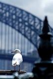 främre hamnseagull för bro Arkivfoton