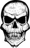 främre läskig skalle Arkivbilder