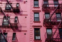 främre nya rosa york Royaltyfri Fotografi