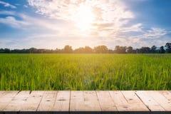 Främre och suddig bakgrundsrisfältsunli för träbrädetabell Arkivbild