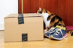 Främre sikt av den nyfikna katten som kontrollerar amasonbörjan Arkivfoto