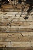 Främre sikt av den wood väggen med linjen modell Arkivbilder