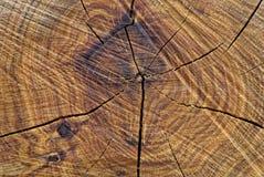Främre sikt av en cutted trädstam arkivfoto