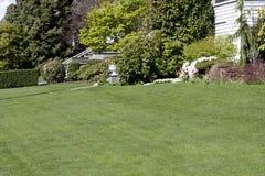 Främst gård för trevlig gräsmatta arkivfoton