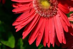 Fräsa sommar Fotografering för Bildbyråer