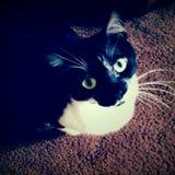 Fräulein Kitty stockbilder