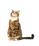 fråga kattkopian som ser upp avstånd Royaltyfri Foto