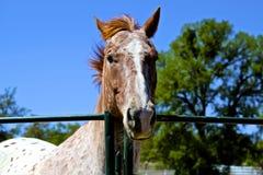 frågvis häst Royaltyfri Bild