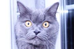 frågvis katt arkivfoto