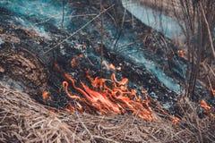 Från bränningen av torrt gräs dödas kryp, igelkottar och kaniner royaltyfri bild