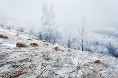 Från den frostiga morgonen för serie Arkivbilder