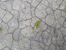 Från den torkade övre och livlösa jorden gör den blyga och svaga växten vägen arkivfoton