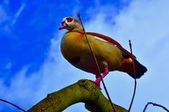 Från en sikt för öga för fågel` s arkivfoto