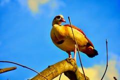 Från en sikt för öga för fågel` s royaltyfria foton