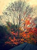 Från färg till tomhet Arkivfoton