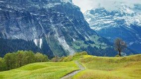 Från Grindelwald i Bernese fjällängar: Alpina ängar och Eigeren royaltyfri foto