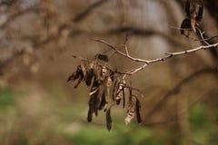 Från hösten som fjädrar Royaltyfri Fotografi