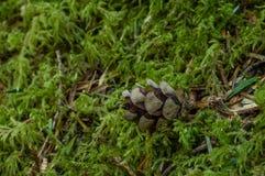 Från litet frö Royaltyfria Bilder