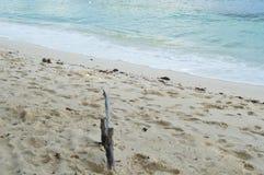 Från Seychellerna härlig strand Arkivbilder